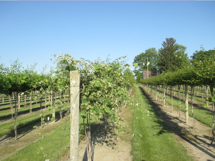 A landscape view that shows the scope and location of the damage. A grower could also use a flag or other marker at the end of the row to establish the location.
